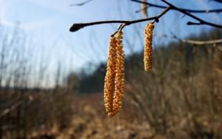 Allergie et pollen, à prendre en compte lors d'une séance de marche